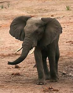 African Animals Facts & Pictures