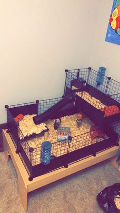 DIY C&C Guinea Pig Cage Baby Guinea Pigs, Guinea Pig Care, Diy Guinea Pig Cage, Guinea Pig House, Hamsters, Rabbit Cages, Bunny Cages, Skinny Pig, Hamster Cages