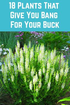18 Plants That Give You Bang For Your Buck - - Wondering which plants are worth buying? While price may play a role, it's the return on your investment that should ultimately determine which plants you choose to grow and which you leave behind at the. Garden Yard Ideas, Diy Garden, Dream Garden, Lawn And Garden, Garden Projects, Plants For Rock Garden, Garden Art, Garden Ideas To Make, Flower Garden Plans