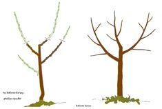 Návod na pěstování meruněk - Zahradnictvi Spomyšl Garden, Garten, Lawn And Garden, Gardens, Gardening, Outdoor, Yard, Tuin