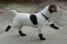 Walkaboots - best dog boots