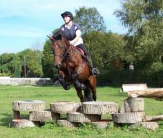 99 best horse jumps hunter jumper cross country ideas images in