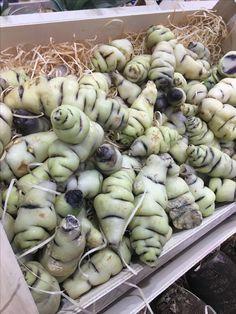 Artichoke, Garlic, Vegetables, Food, Artichokes, Essen, Vegetable Recipes, Meals, Yemek