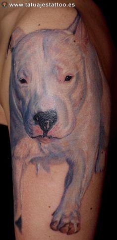 tattoo de perros pitbull