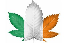 Will Ireland Be the Next Country to Legalize Pot? | Cannabis Culture | October 30 2013