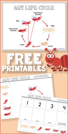 Free Ant Life Cycle Printables