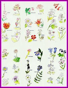 f8693e348 Flower Drawing Flower Drawing Names Incredible With Names Drawing Flower  And List Pink Home Pict Of