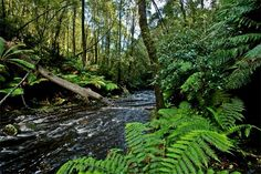 Dip River, part of the Dip River Forest Reserve near Stanley on Tasmania's north west coast (walks, picnics and barbeques)