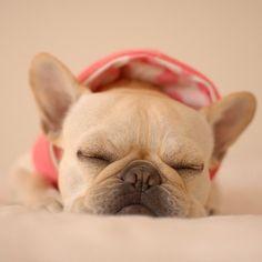 Batpig & Me Tumble It • nap..  by tirol_tirol http://ift.tt/1gxTDMU