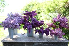 Love lilacs!