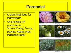 plant-word-3-638.jpg (638×479)