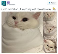 23 Hilarious Tweets That Will Make Any Cat Owner Say,