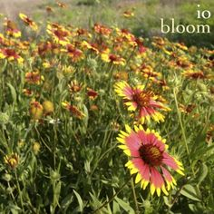 Stream io: bloom, a playlist by In Obscura (io) from desktop or your mobile device Bloom, Music, Plants, Photography, Musica, Musik, Photograph, Photography Business, Flora