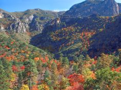McKittrick Canyon autumn   ... of year. But in the fall the Bigtooth maples explode with color