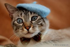 Cat French Beret  Wool Hand Felted Mini Beret von ToScarboroughFair, $36.00
