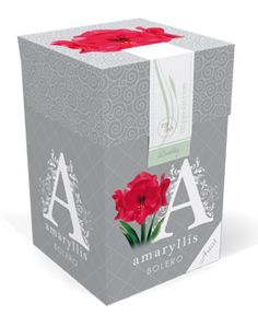 € 3,99 (incl. btw) Amaryllis Bolero maat 26/28 in een klassieke doos. De klassiek ontworpen verzegelde doos is gebaseerd op de barok stijl. In deze doos zit een topkwaliteit roze Amaryllis. Op de klassiek gestileerde doos vind je de plantinstructies en een QR-code. Als je de QR-code scant vind je plant tips, instructies en verschillende video's. Deze Amaryllis kan je binnen in een pot* planten. Een mooie verpakking voor een groen cadeau.