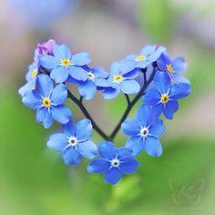 Coração em flores.