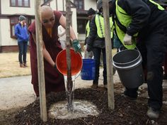 Karmapa's Urban Activism: Planting Trees on the Streets of New Haven - Karmapa America 2015