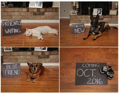 Baby announcement with pets.