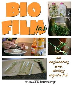 BioFilm Lab experiment - great for high school and middle school science