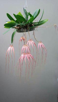 So viele Arten von Orchideen
