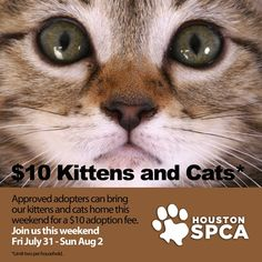 All Kittens And Cats At The Houston Spca Are 10 To Approved Adopters From July 31 Through August 2 Limit Two Per Household Www Houst Cats Dog Person Kittens