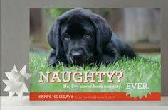 Google Image Result for http://1.dog-milk.com/images/2010/12/minted-dog-holiday-cards-1.jpg