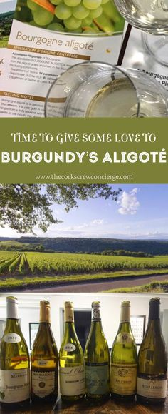 It's time to discover the other white wine of Burgundy - easy-drinking, versatile, and affordable Aligoté. White Burgundy Wine, White Wine, Ripe Peach, Sustainable Farming, Green Fruit, French Wine, Growing Grapes, Countries Around The World, Pinot Noir