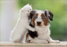 Just make sure they're appropriate. | Cats And Dogs Reveal The Secrets Of Making Friends