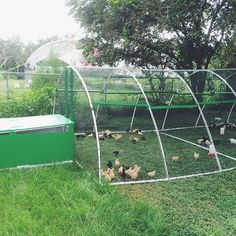 I built this for my little chicken children. They thank me with their eggs.