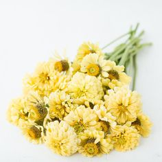 Zinnia Isabellina Creamy Yellow by Floret Shop Unique Flowers, Green Flowers, Cut Flowers, Cut Flower Garden, Flower Farm, Broom Corn, Flower Games, Zinnia Elegans, Globe Amaranth