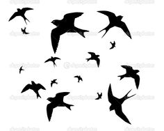Find Flying Swallows On White Background stock images in HD and millions of other royalty-free stock photos, illustrations and vectors in the Shutterstock collection. Thousands of new, high-quality pictures added every day. Silhouette Clip Art, Silhouette Images, Black N White Images, Black And White, Different Birds, Bird Pictures, Illustrations, Art Google, Clipart