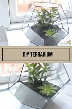DIY Terrarium | How to make a geometric terrarium | The Tiny Honeycomb
