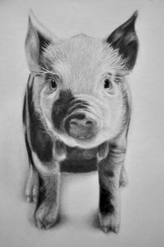 One of my sketch a day drawings Piglet . Farm Animals, Animals And Pets, Cute Animals, Animal Sketches, Animal Drawings, Pig Crafts, Pig Drawing, Pig Illustration, Pig Art