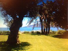 sea grass , lovely