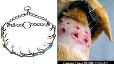 Spain, prohibit the use and sale of spiked choke collars in Osona