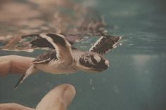 baby seaturtle like squirt from nemo!!!! <3