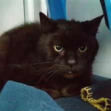 Smudge - Cat Rehoming & Adoption - Wood Green Animals Charity