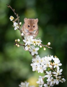 There's something perfect about teeny mice and teeny flowers.