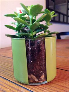 Got old unused Bath and Body Works candle jars lying around? Clean them up, add a little spray paint and you have the perfect pot holder for succulents!! Reuse Containers, Candle Containers, Pots, Old Candle Jars, Body Works, Candle Making, Succulents, Paint, Recycled Jars