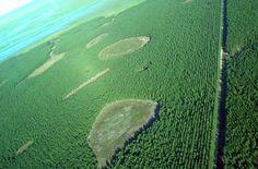 PUEBLA REVISTA: #Paisajes: Esteros del Iberá, Corrientes