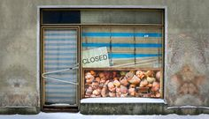 R_Rose_Closed_I.jpeg (480×276)