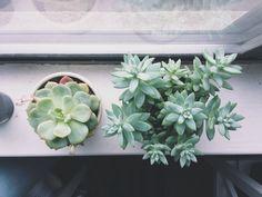 succulents Vsco Grid, Botany, Succulents, Green, Gardens, Plants, Succulent Plants
