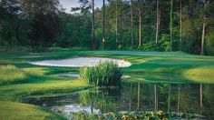 In the Piedmont, you can play one afternoon among the pines of the Sandhills and the next morning walk a fairway framed by towering hardwoods. Pine Needles Golf, North Carolina Resorts, Play Golf, Travel And Tourism, In The Heart, Plan Your Trip, Golf Tips, Beautiful Beaches, Golf Courses