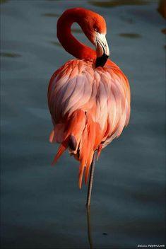 Eagle Bird, Bald Eagle, Exotic Birds, Colorful Birds, Bird Barn, Blue Bird, Yellow Birds, Pretty Birds, Little Birds
