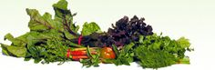 Gallbladder Diet specifically for gallstones and other gallbladder disease, What foods to avoid for gallbladder attack, gallbladder pain and after gallbladder surgery ....