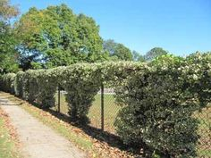 . With a few simple choices, you can create both privacy and beauty by covering them with vines. Since it may take a few years for woody perennials to cover a structure completely, try mixing annuals and perennials in the first few years. That will help create color and cover right from the start.