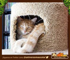 #SabiasQue la mejor ubicación para los comederos, cama y arenero de los gatos son los espacios amplios. Conoce cómo encontrar el lugar adecuado para tu gato en: http://www.universomascotas.co/bienestar/gatos/la-casa-y-el-lugar-adecuado-para-mi-gato