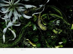 Encyclopedia of Flowers is a visual exploration of the breathtaking floral arrangements by Makoto Azuma—encounters of unusual, sometimes exotic plants that wouldn't typically occur in nature. With his meticulously composed photographs,  Shunsuke Shiinoki exposes the flowers' tenuous existence, their fragile forms, continuous metamorphoses, and inevitable decay.
