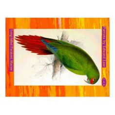 Edward Lear. Long-billed Parakeet Macaw. Postcard - postcard post card postcards unique diy cyo customize personalize